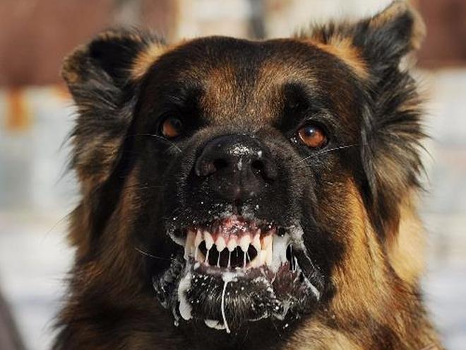 Cà Mau: Chó dại xổng chuồng cắn 4 người rồi bất ngờ lăn ra chết - Ảnh 1
