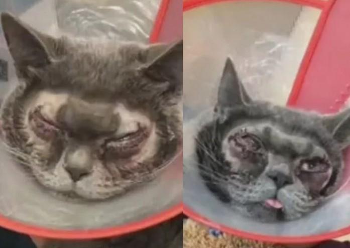 Trung Quốc: Sự thật về vụ nhà giàu chơi trội mang mèo đi phẫu thuật thẩm mỹ mắt - Ảnh 1