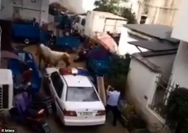 Ngựa bất ngờ phi nước đại qua thị trấn đâm bay người đi đường - Ảnh 2