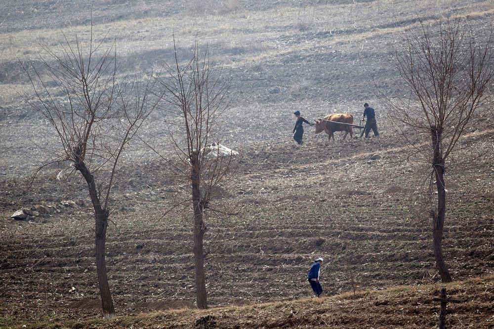 Mất mùa, mỗi người Triều Tiên chỉ có khẩu phần lương thực 300g mỗi ngày - Ảnh 1
