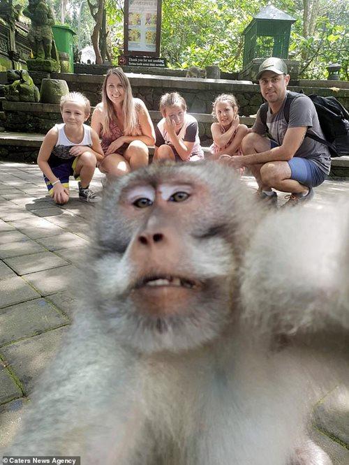 Khỉ cũng biết selfie và giơ ngón tay giữa gây bão mạng - Ảnh 1