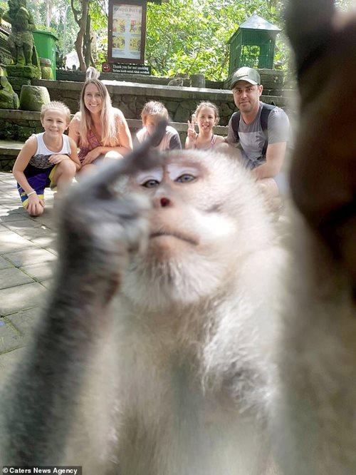 Khỉ cũng biết selfie và giơ ngón tay giữa gây bão mạng - Ảnh 2