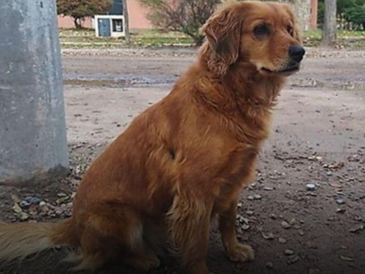 Chú chó trung thành đứng đợi chủ cả năm trời ngoài đồn cảnh sát - Ảnh 1