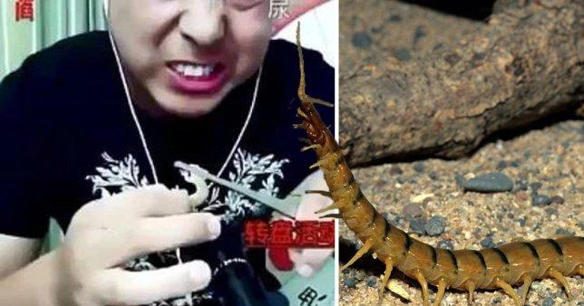 Vlogger tử vong khi đang livestream cảnh ăn côn trùng độc - Ảnh 1