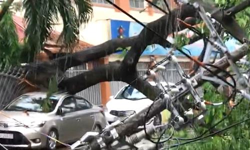 Gió mạnh nhổ cây to bật gốc, đè bẹp ô tô ở TP. HCM - Ảnh 1