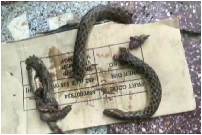 Bợm nhậu lao vào cắn nát rắn độc để trả thù việc bị tấn công - Ảnh 1