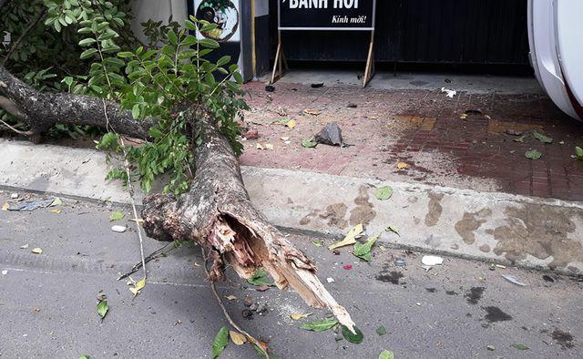 Quy Nhơn: Lạc tay lái, ô tô lao lên vỉa hè tông đổ cây, 2 người thương vong - Ảnh 2