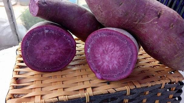 Chị em sốt sình sịch mua khoai lang tím Úc giá đắt về ăn ngừa ung thư - Ảnh 2