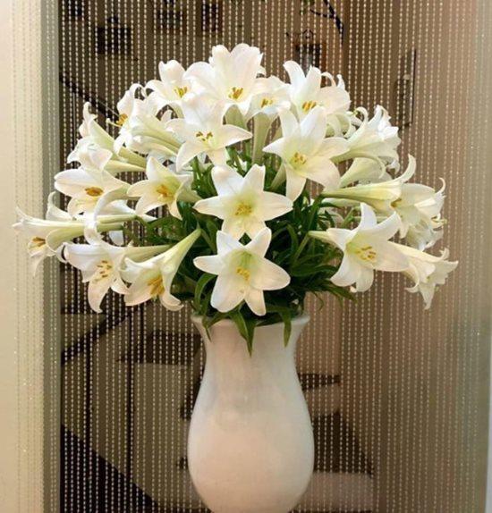Điểm danh những loại hoa, cây cảnh chứa chất cực độc cần cẩn thận ngày Tết - Ảnh 2