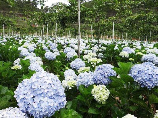 Điểm danh những loại hoa, cây cảnh chứa chất cực độc cần cẩn thận ngày Tết - Ảnh 4