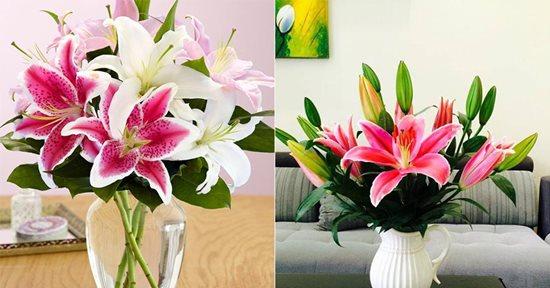 Điểm danh những loại hoa, cây cảnh chứa chất cực độc cần cẩn thận ngày Tết - Ảnh 7