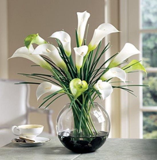 Điểm danh những loại hoa, cây cảnh chứa chất cực độc cần cẩn thận ngày Tết - Ảnh 8