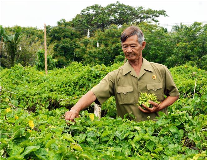 Bí quyết kiếm hàng chục triệu mỗi tháng của lão nông sống giữa rừng U Minh - Ảnh 2