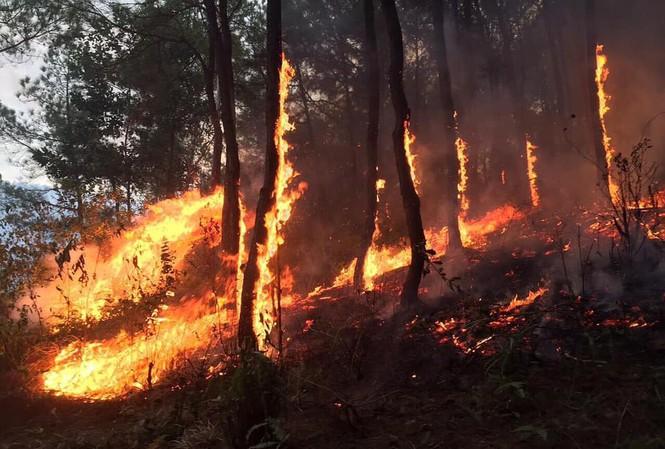 Tặng Huân chương Dũng cảm cho người phụ nữ quên mình chữa cháy rừng - Ảnh 1