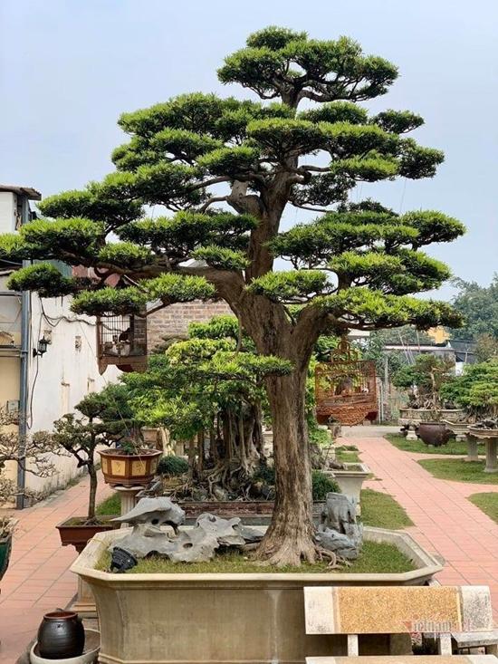 Chiêm ngưỡng vườn cảnh triệu đô của đại gia Hà Thành từng bán nhà để mua cây - Ảnh 3