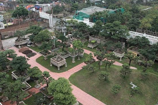 Chiêm ngưỡng vườn cảnh triệu đô của đại gia Hà Thành từng bán nhà để mua cây - Ảnh 1