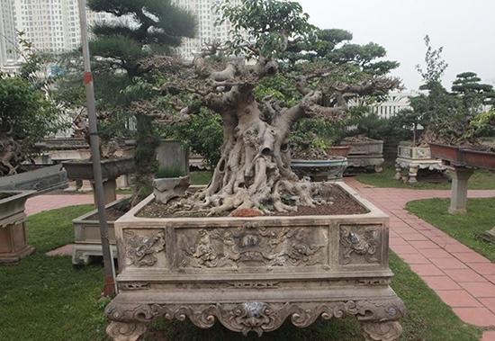 Chiêm ngưỡng vườn cảnh triệu đô của đại gia Hà Thành từng bán nhà để mua cây - Ảnh 6