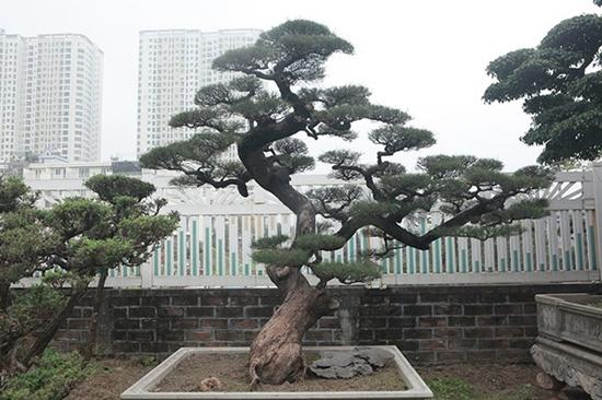 Chiêm ngưỡng vườn cảnh triệu đô của đại gia Hà Thành từng bán nhà để mua cây - Ảnh 8