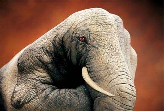 Những bức ảnh động vật đẹp được tạo bởi vật liệu gây sửng sốt cho người xem - Ảnh 8