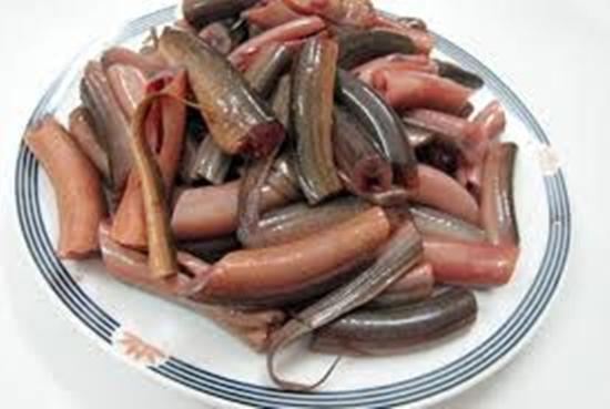 Những điều cấm kỵ khi ăn lươn ai cũng phải biết - Ảnh 1