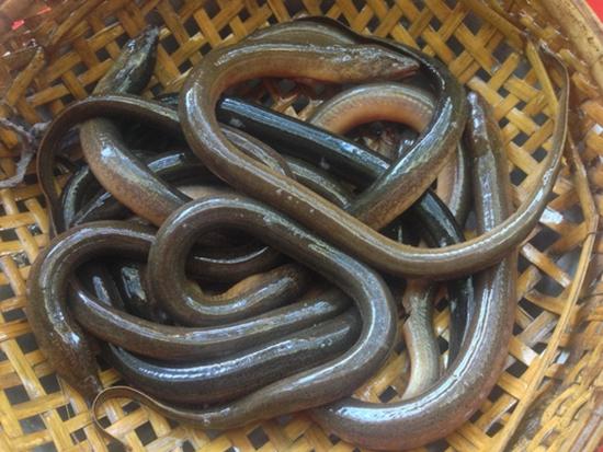 Những điều cấm kỵ khi ăn lươn ai cũng phải biết - Ảnh 4