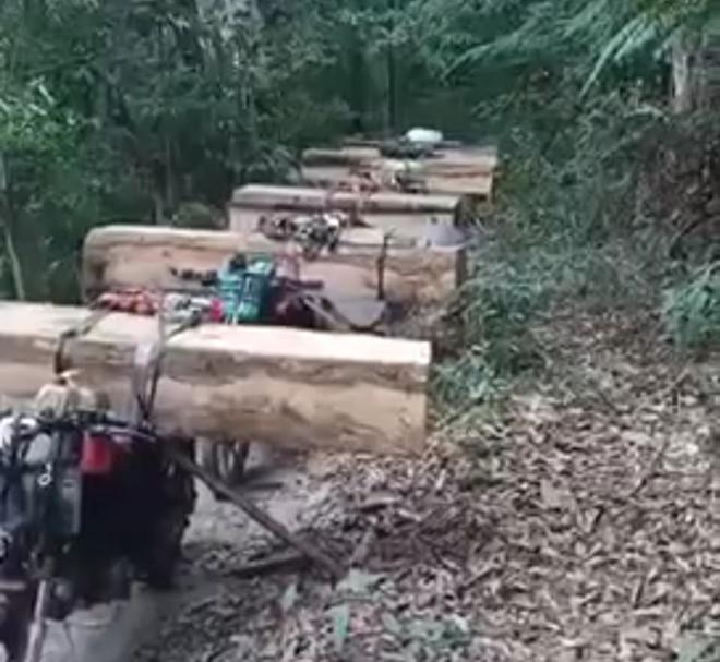Bắt quả tang cả đoàn xe máy của lâm tặc vận chuyển gỗ lậu ở Kon Tum - Ảnh 1