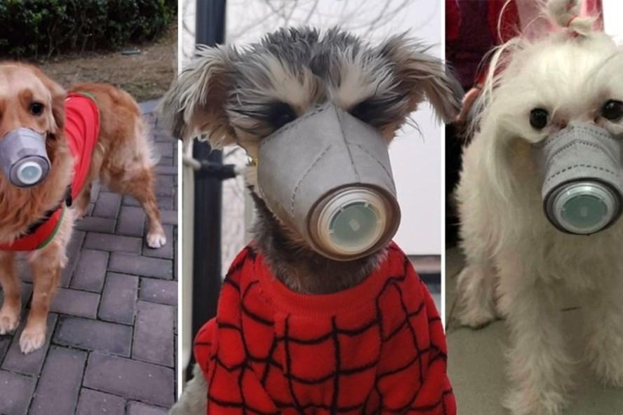 Nhà giàu sẵn sàng bỏ 50 USD sắm khẩu trang chống nCoV cho chó gây sốt - Ảnh 2