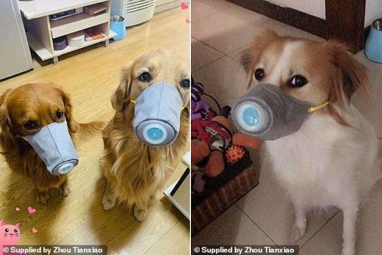 Nhà giàu sẵn sàng bỏ 50 USD sắm khẩu trang chống nCoV cho chó gây sốt - Ảnh 1