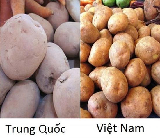 Tuyệt chiêu để phân biệt rau củ Trung Quốc và Việt Nam cho các bà nội trợ - Ảnh 9