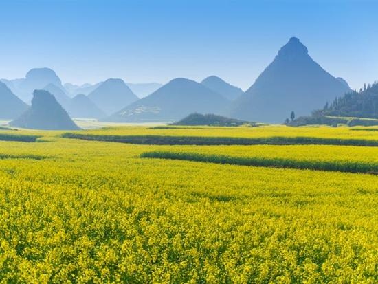 Những cánh đồng hoa đẹp nhất thế giới bắt đầu nở rộ - Ảnh 1