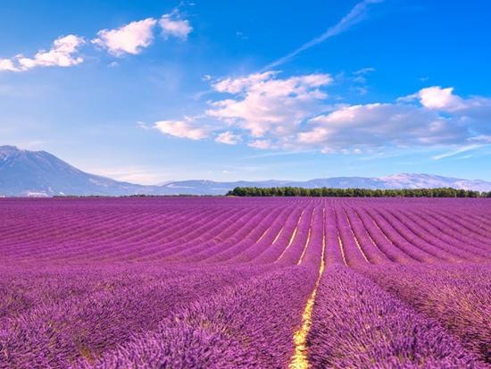 Những cánh đồng hoa đẹp nhất thế giới bắt đầu nở rộ - Ảnh 13