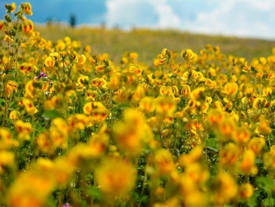 Những cánh đồng hoa đẹp nhất thế giới bắt đầu nở rộ - Ảnh 14