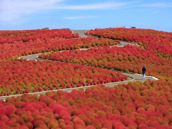 Những cánh đồng hoa đẹp nhất thế giới bắt đầu nở rộ - Ảnh 15