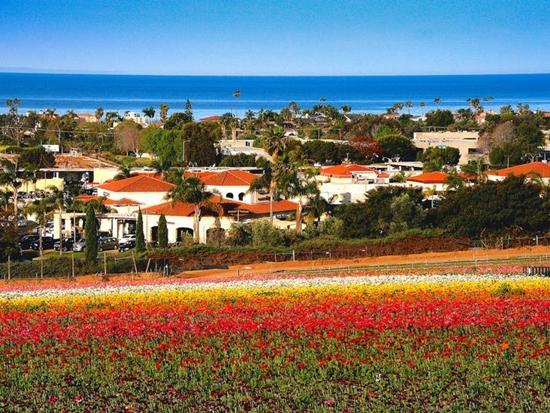 Những cánh đồng hoa đẹp nhất thế giới bắt đầu nở rộ - Ảnh 3