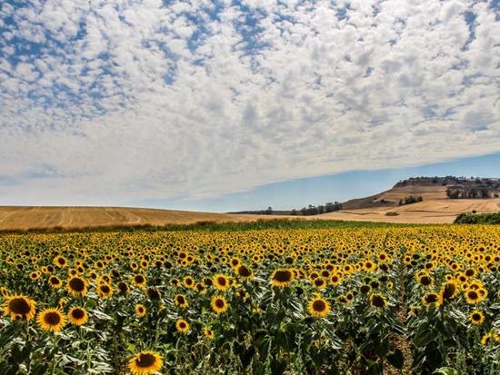 Những cánh đồng hoa đẹp nhất thế giới bắt đầu nở rộ - Ảnh 8