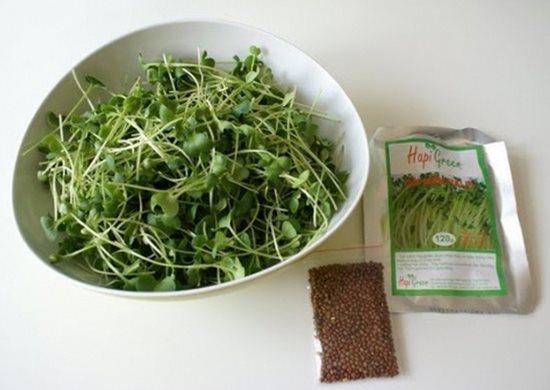 Ăn rau mầm sao cho bổ, tránh ngộ độc - Ảnh 2