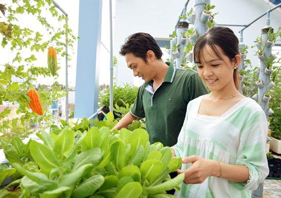 """Ngưỡng mộ """"Khu vườn tình yêu"""" đơm trái ngọt trên sân thượng của cặp vợ chồng trẻ Cà Mau - Ảnh 2"""