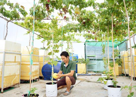 """Ngưỡng mộ """"Khu vườn tình yêu"""" đơm trái ngọt trên sân thượng của cặp vợ chồng trẻ Cà Mau - Ảnh 3"""