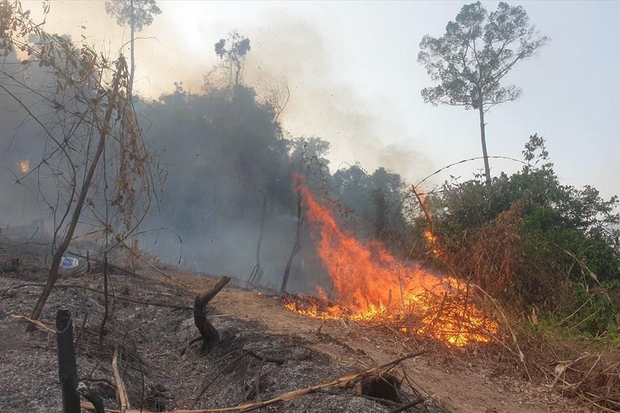 Giám đốc ban Quản lý rừng phòng hộ gián tiếp gây cháy rừng - Ảnh 1