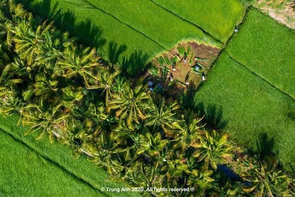 Vẻ đẹp siêu thực của cánh đồng cói Việt Nam - Ảnh 1
