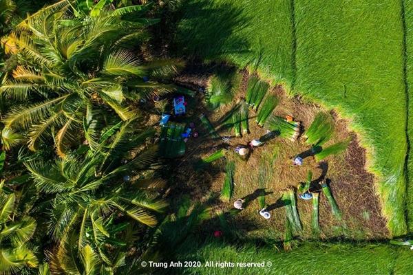 Vẻ đẹp siêu thực của cánh đồng cói Việt Nam - Ảnh 12