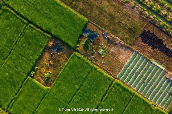 Vẻ đẹp siêu thực của cánh đồng cói Việt Nam - Ảnh 3