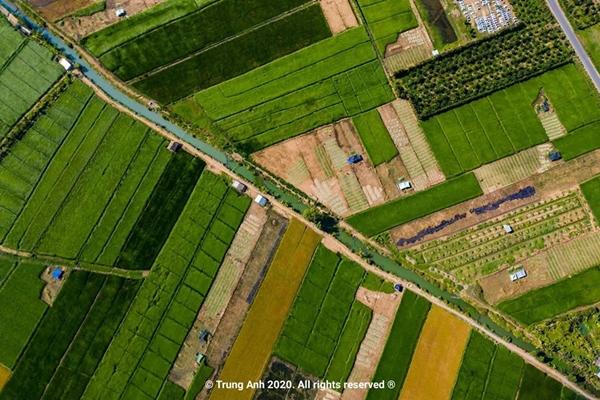 Vẻ đẹp siêu thực của cánh đồng cói Việt Nam - Ảnh 4