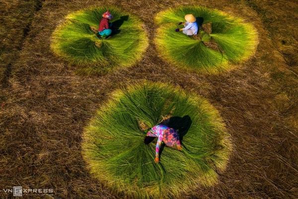 Vẻ đẹp siêu thực của cánh đồng cói Việt Nam - Ảnh 5