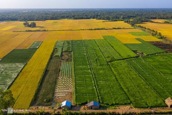 Vẻ đẹp siêu thực của cánh đồng cói Việt Nam - Ảnh 10