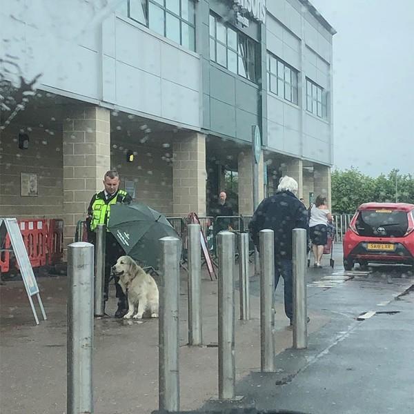 """Nhường ô che mưa cho thú cưng, bảo vệ được khen ngợi là """"người hùng"""" - Ảnh 1"""