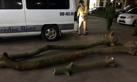 Trên đường vận chuyển gỗ sưa vừa trộm được thì bị bắt - Ảnh 1
