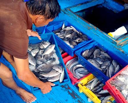 Hà Tĩnh phổ biến 154 loại hải sản chưa an toàn cho ngư dân - Ảnh 1