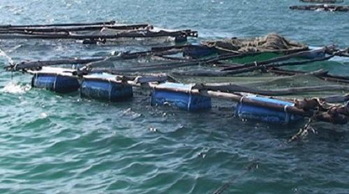 Nước dâng bất ngờ, cuốn ngư dân cùng bè cá trôi ra biển - Ảnh 1