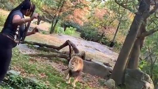 Chàng trai nhảy qua hàng rào để vào chuồng nằm cùng sư tử dù được can ngăn - Ảnh 2